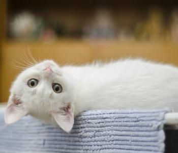 Miks on just praegu hea aeg endale kass võtta?
