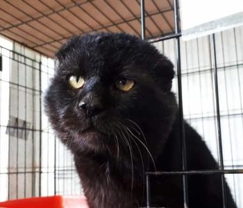AITA ABIVAJAJAT ⟩ Tänavalt päästetud Vidriku suu seisukord ajas loomakaitsjad ahastama