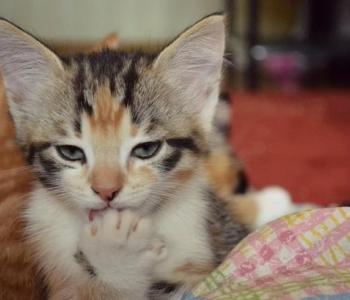 Aita aidata: Pesaleidja kasside varjupaigas on tekkinud kriitiline olukord