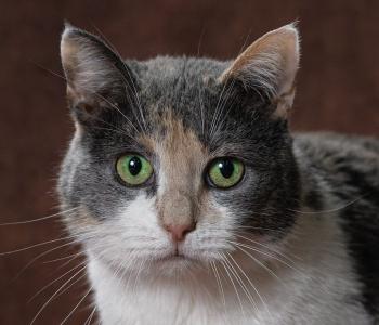 PÄEVAKÄPP ⟩ Kodu otsib kaunis ja uudishimulik kassipreili Una