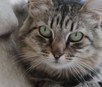 PÄEVAKÄPP ⟩ Sooja kodukest ootab pikakarvaline iludus Sigrid