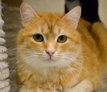 Juba homme! Pesaleidja kutsub kõiki kassisõpru avatud uste päevale