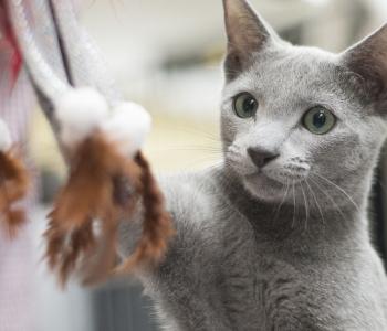 Tahad oma kassile rõõmu valmistada? Meisterda talle vahva mänguasi