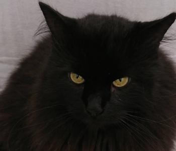 Salapärase Mr X-i saatus kaalukausil: kass ootab kasvajaproovi tulemusi