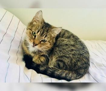 Igal kassil on rääkida oma lugu: Pesaleidja suurim hoiukodu on suures hädas ja vajab abi