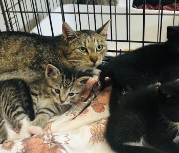 Pesaleidja kutsub appi: paku hoiukodu ühele kümnest kassipesakonnast