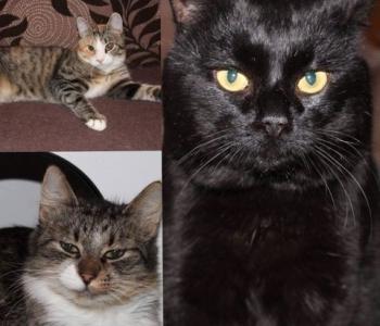 Aita abivajajaid: haigustega maadlev kassikolmik vajab ravi jätkamiseks toetust