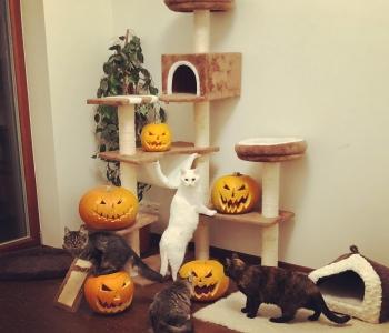 Halloweeni ettevalmistus