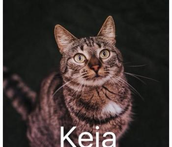Rekordkuu oktoober - 100 kassi!