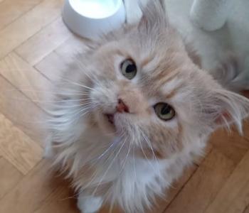 Koduotsinguil Fritzust sõbralikumat ja leplikumat kassi annab otsida