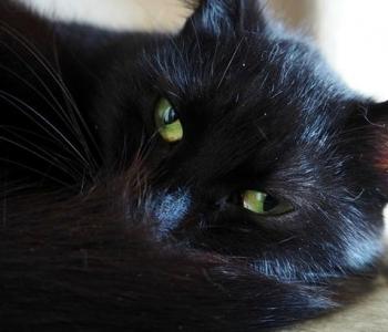 Päevakäpp: rohesilmne Ebony ootab kedagi, kes tema silmad särama paneks