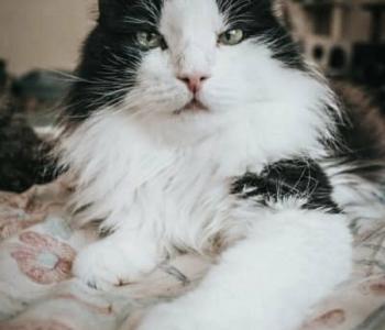Freo lugu | 143 kassiga koos elav introvert igatseb privaatsust