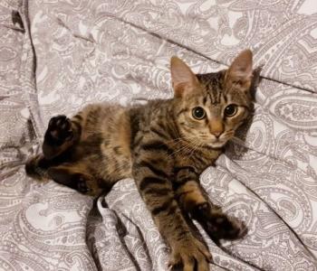 Päevakäpp: nooruke Kakao muutus üleöö julgeks kassipoisiks