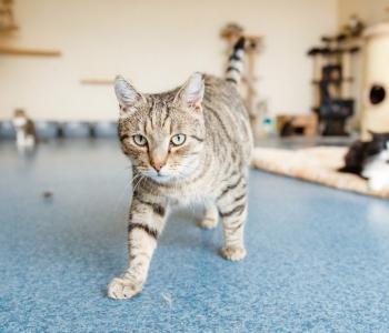 Varjupaigas elavad vanad, haiged ja eraklikud kassid? 5 müüti, mida sa varjupaigaloomade kohta ei peaks uskuma