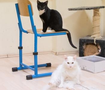 Mida peab teadma, kui koju tuleb teine kass?