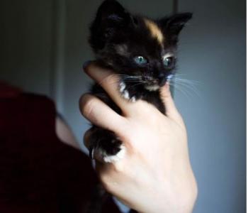Kertu | Laitse kolooniast päästetud kassipoja raviarve küündis pea tuhande euroni