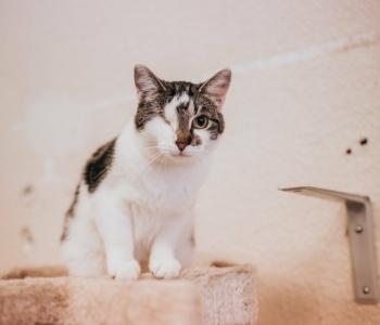 Mango lugu | Ühest silma ilma jäänud kassike ootab abi, et ravida teist silma