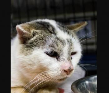 Masoni lugu | Hüljatud kass, kes peab puuris konutama seni, kuni talle uue kodu leiame