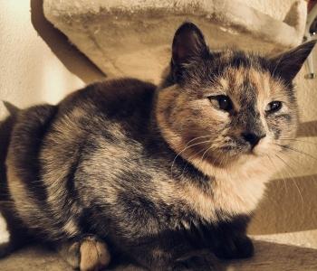 Mur-Muri lugu | kassipoeg istub puuris seni, kuni leidub keegi, kes saab teda aidata