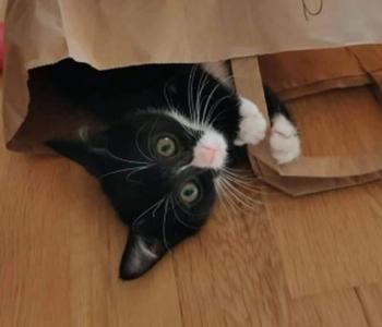 Head uudised: tänu lahkete inimeste toele saavad kassipoiss Nordhale raviarved tasutud