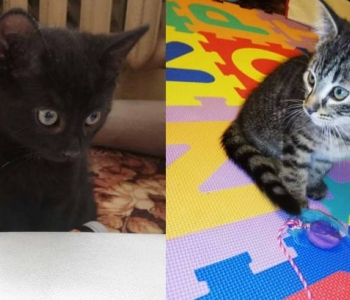 Päevakäpp: marakratid Semu ja Nuuskur tahavad enne kevadist beebibuumi kodu leida