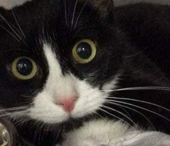Aita abivajajat: koduaknast alla kukkunud kass Sabriina raviarved ulatuvad kosmilistesse kõrgustesse