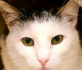 Taavi lugu | Üks täiesti keskpärane eesti kass on oma usalduse inimeste vastu täielikult kaotanud