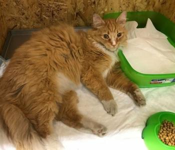 Vähihaige naisterahva ainus sõber kass Timka vajab raviarve tasumisel abi