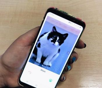 Vaba Saba: eestlaste loodud kassi-Tinder aitab kiisudel kodu leida