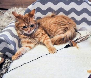 Tulekahjus kannatada saanud kassipojad vajavad abi