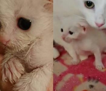 """""""Magasin kiisude lähedal, hommikuti ärgates ei julgenud vaadata, kas keegi on veel elus!"""" Vabatahtlik räägib avameelselt kassipoegade elule aitamisest"""