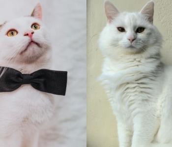Ville ja Marjukka abipalve: valged karvakerad tahavad kassitoast hoiukoju pääseda