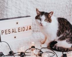 SOS ⟩ Eesti üks suurimaid loomade varjupaiku vajab abi võitluses kassikatku vastu