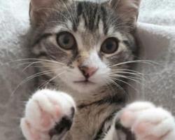 GALERII ⟩ 43 armast karvakera leidsid augustis endale päris oma kodu