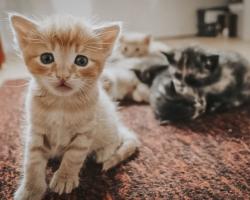 Kviti, Mark ja teised annavad nõu, kuidas toita kassi