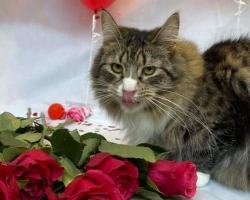 Pesaleidja kassid tähistasid sõbrapäeva eriti uhke fotosessiooniga