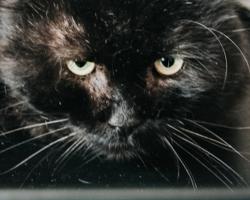 SOS! Nohune ja stressis kassipoiss Ants vajab esimesel võimalusel hoiukodu