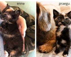 Inimeste hooletuse tagajärg: koloonias sündinud kassipoeg võitleb elu eest