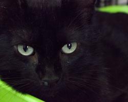 Aita abivajajat: võitlus piinava nohuga jättis kass Tomsile ebameeldiva kingituse