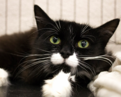 Päevakäpp: stressis Kesse tahab teiste kasside keskelt rahulikku koju pääseda