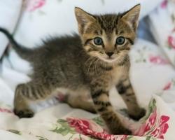 Pesaleidja MTÜ palub abi: kasse tabas äge parvoviiruse puhang