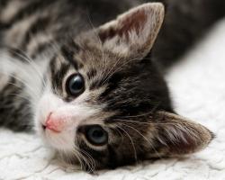 5 näpunäidet, mida silmas pidada kassipoja võtmiseL