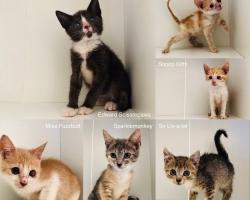 Ahoi kassisõber! Mitu pesakonda kassipoegi otsib ajutist varjupaika