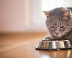 Tee üks jõulueelne heategu: MTÜ Pesaleidja kassid paluvad abi, sest neil ei ole enam süüa