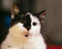 7 märki sellest, et su kassil on valus