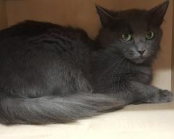 Tee Egelile esimene sünnipäevakingitus: märtsis aastaseks saav kass ihkab koju