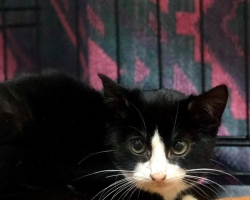 Pandeemia tõi kriisi ka kassituppa: väike Martsipan palub abi