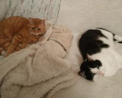 7 meeleolu, mida kass oma magamisasendiga meile näitab