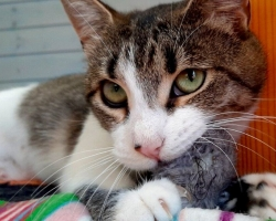 Miks mu kass mind hammustab? Ära võta isiklikult!