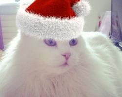 KIISUBLOGI | Kass Ada jõulumuinasjutt: temaga juhtus tõeline jõuluime
